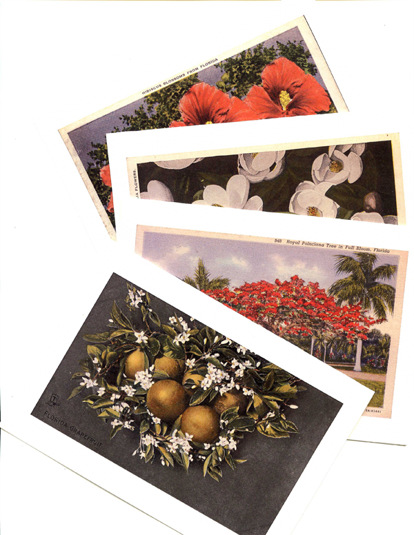 Postcard Note Cards of Florida Flowers