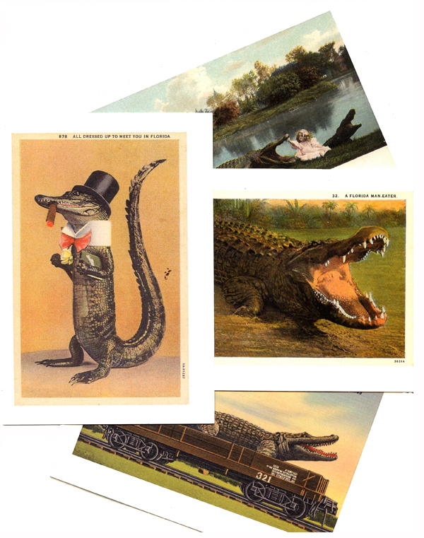 Postcard Note Cards of Alligators